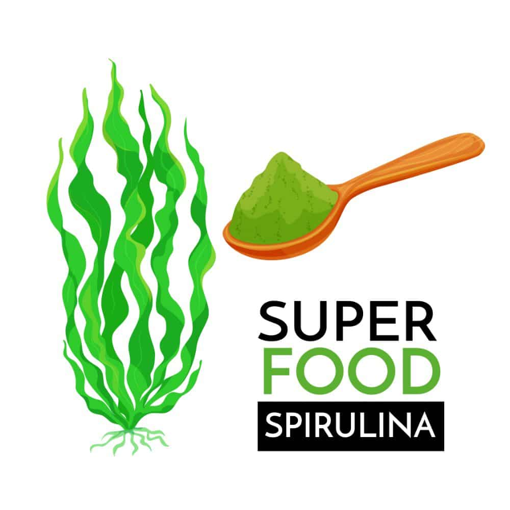 spiruline super food 1